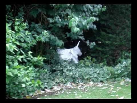 Unicorn Sighting And Attack Caught On Tape  Amazing Footage