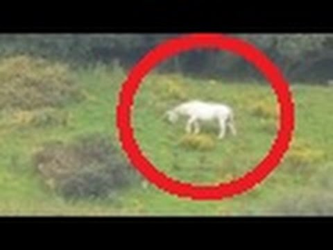 Unicorn Sighting Caught On Tape In England Wow!