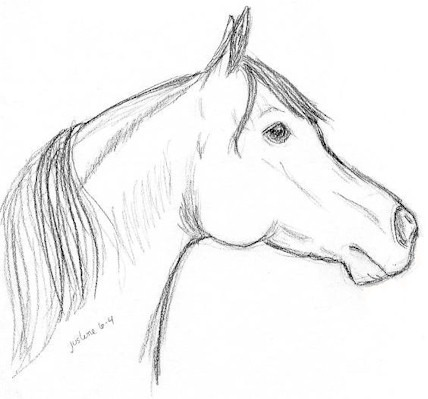 Horse Head Drawing Pictures At Paintingvalley Com