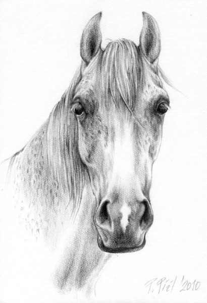Horse Head Images Drawing At Paintingvalley Com
