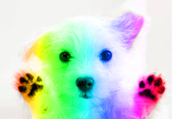 Rainbow Puppy By Jewel