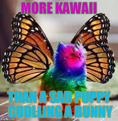 Rainbow Unicorn Butterfly Kitten