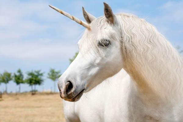 Unicorn Land Announces Uk Tour Where Kids Can Ride And Meet The