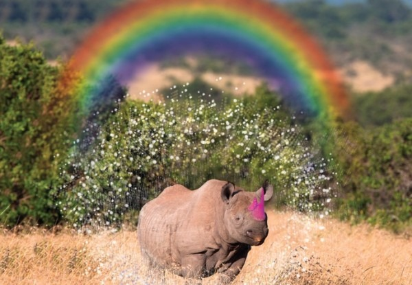 Breaking News  Scientists Find Rhinos Share Common Ancestry With