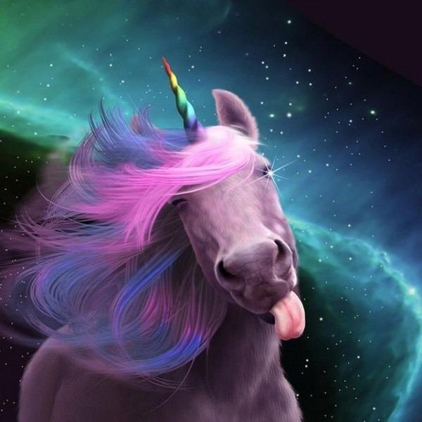 Heather Lloyd On Twitter   Shut Up! It's National Unicorn Day