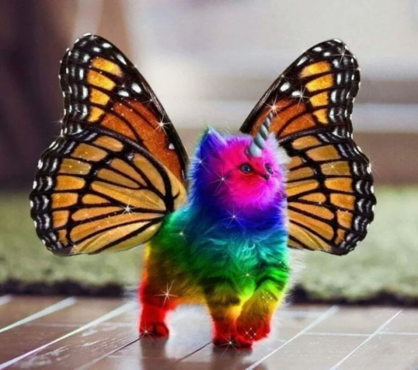 Imgur Likes Rainbow Unicorn Kittens With Butterfly Wings Right
