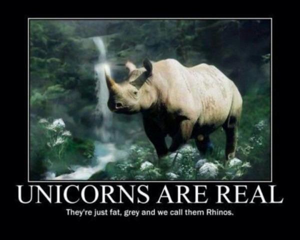 Rhinoceros = Unicorn