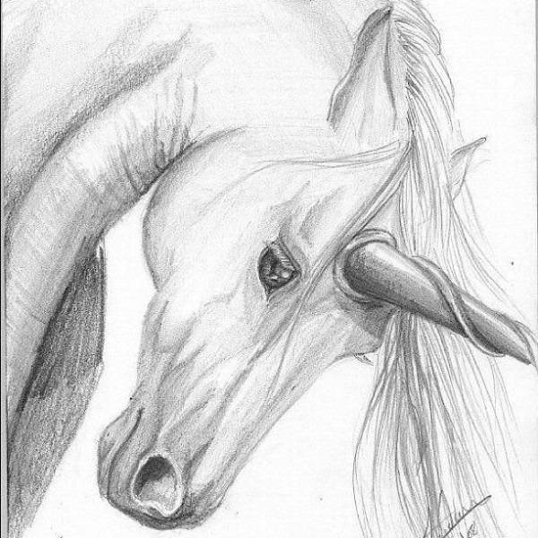 Unicorn Drawing In Pencil