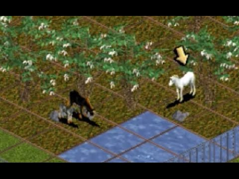 How To Get Unicorns In Zoo Tycoon