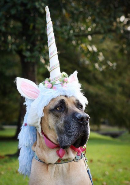 21 Great Danes With Better Costumes Than You