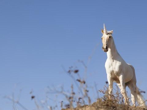 Siberian Unicorns Are Real—magical Powers, Debatable