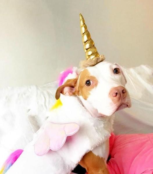 Unicorn Headband For Dog Pet Unicorn Costume Dog Unicorn