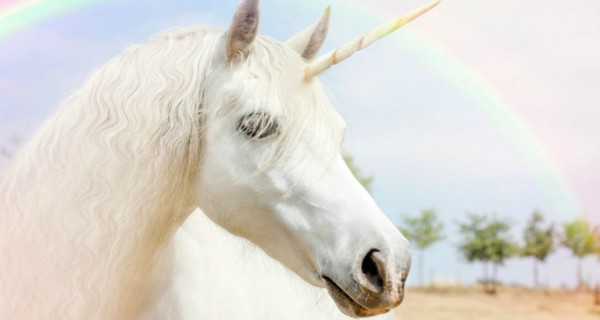 Are Unicorns Real  Here Are The Facts