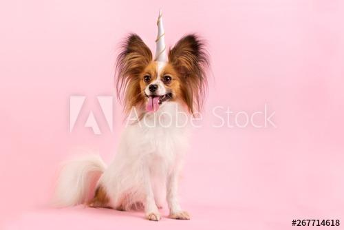 Dog With A Unicorn Horn