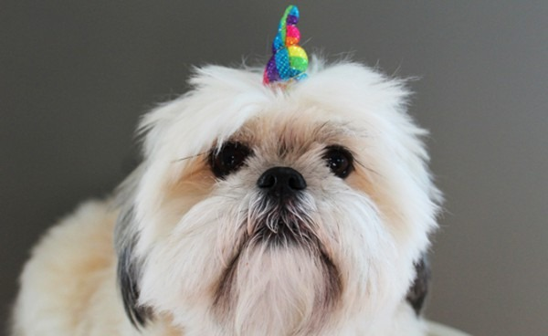 Turn Your Pet Into A Mythical Beast With This Unicorn Horn