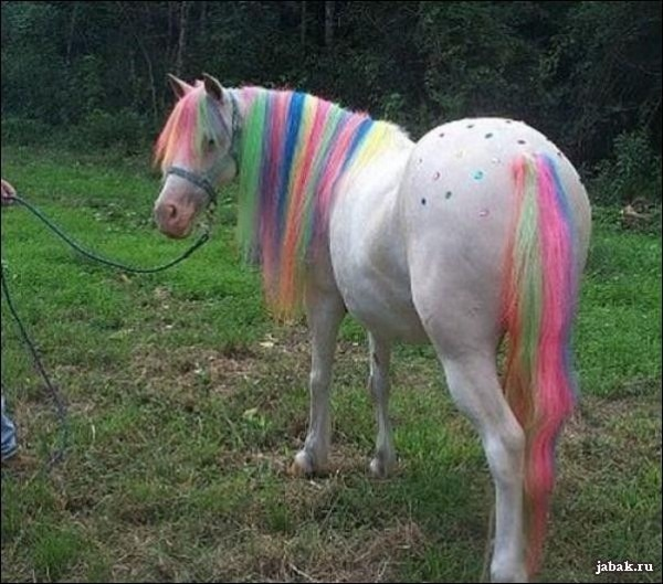 A Real Life  My Little Pony   Lol Omg