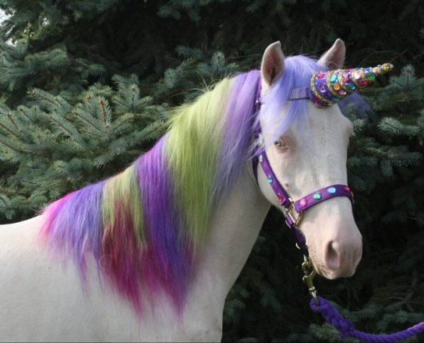 Best Thing I've Seen All Day  Real Life, My Little Pony