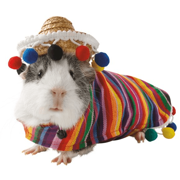 Petsmart Has A Line Of Guinea Pig Halloween Costumes