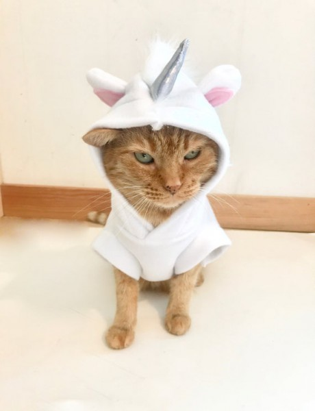 Unicorn Costume For Pets Unicorn Cat Unicat Pet Costume