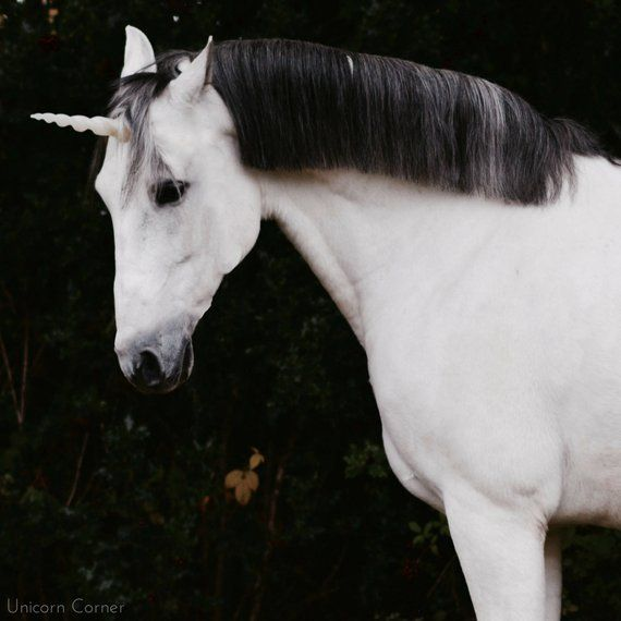 Unicorn Horn Browband   Unicorn Horn Bridle Attachment   Unicorn