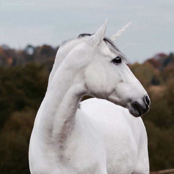 Unicorn Horn For Horses Or Ponies   Realistic Plastic Glitter