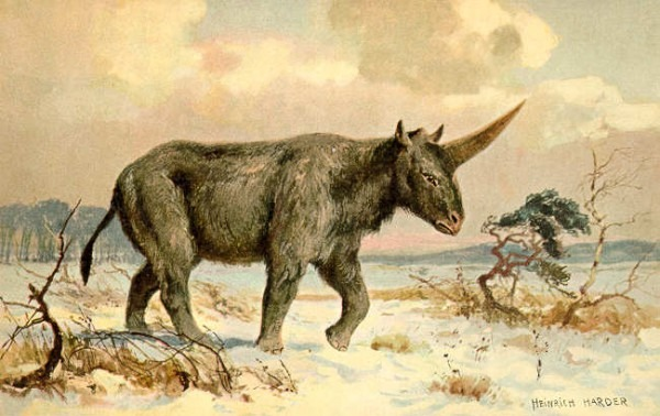 Vikings Used To Sell Fake Unicorn Horns To Clueless Europeans