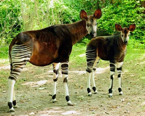 12 Animals Mistaken For Mythical Creatures