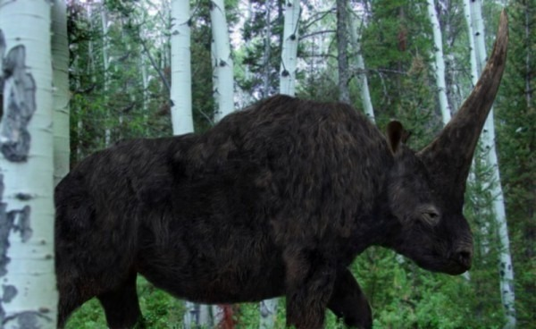 Elasmotherium, The Origin Of Unicorn Legends, Survived Until At