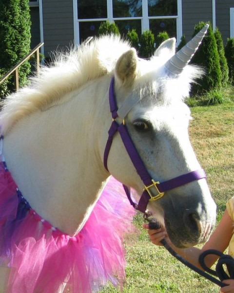 Help Your Horse Find Its Inner Unicorn
