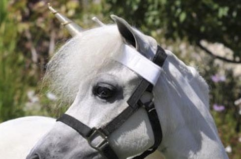 Is This The Ultimate Kids' Pony Accessory