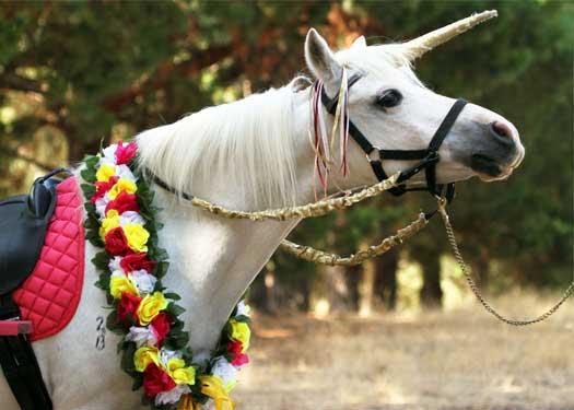 Pony & Unicorn Parties In Melbourne