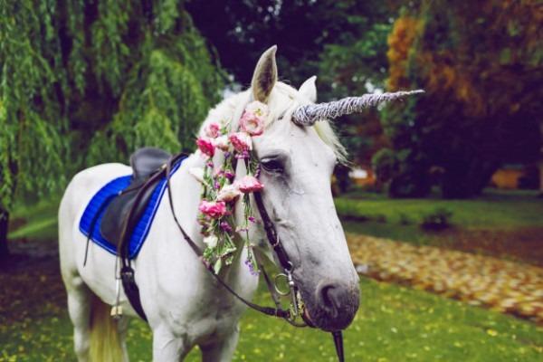 Root And Lemonade  Real Unicorns Or Ponies In Halloween Costumes