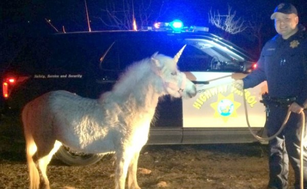 Runaway 'unicorn' Rescued By Helicopter And Horseback