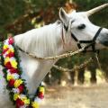 Unicorn Pony Hire Melbourne