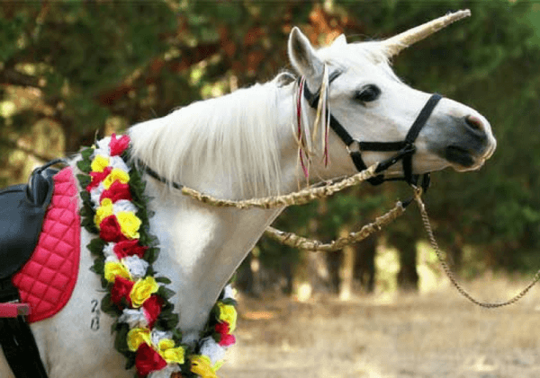 Unicorn Pony Party In Melbourne With 2 Ponies For Kids
